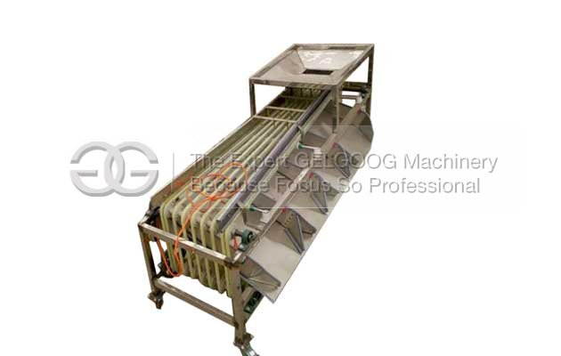 Multi Function Fruit Sorting Machine Manufacturers