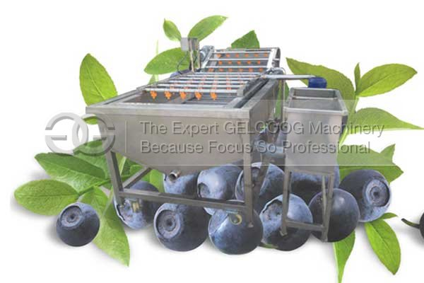 bubble type blueberry washing machine with low price