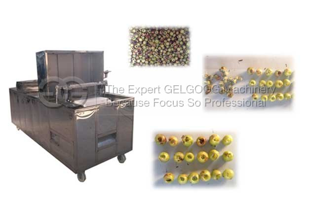 emblica kernel removal machine with low price