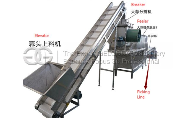 Automatic Garlic Processing Plant