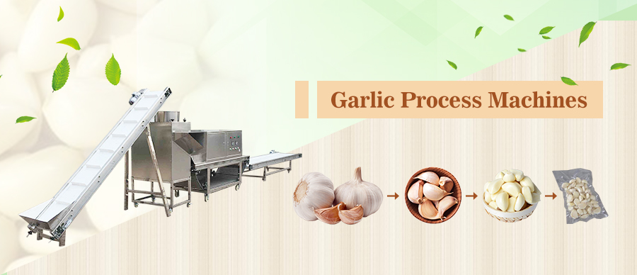 Garlic Process Machines
