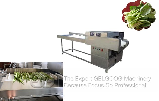 Vegetable Root Cutting Machine