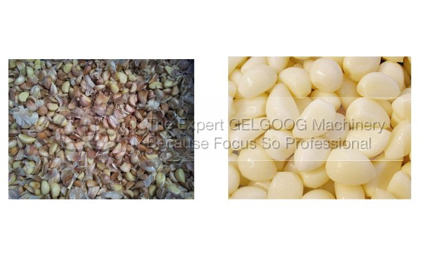 automatic garlic peeling machine with best price made in china