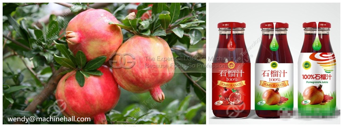 pomegranate processing machine in china with low price