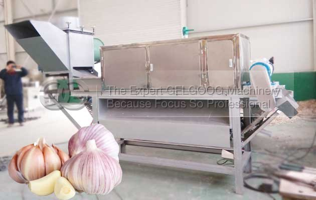 cost of onion and garlic peeling machine