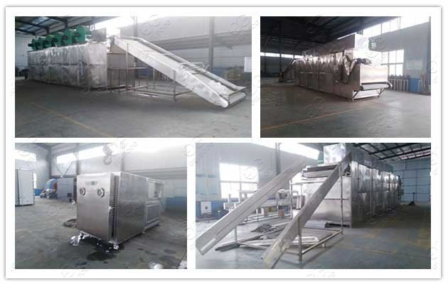 fruit drying machine price in south africa