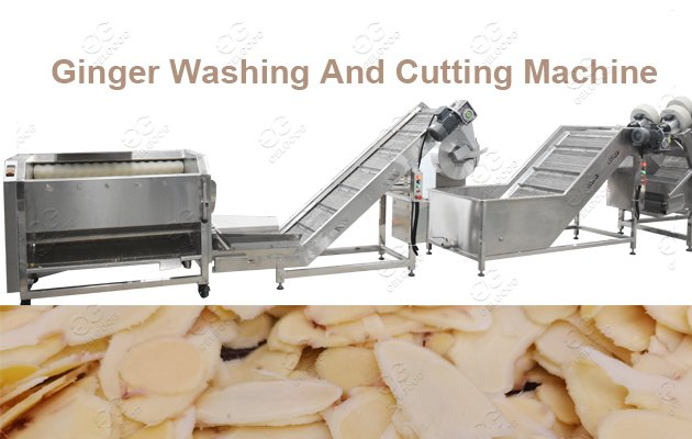 ginger powder process plant